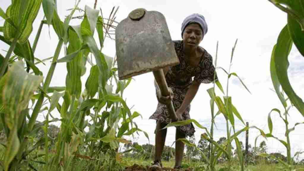 Zimbabwe drought
